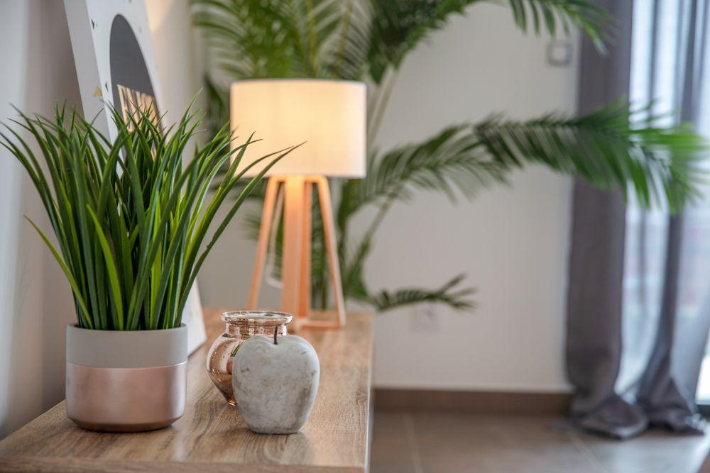 Quelles plantes choisir pour votre intérieur ?